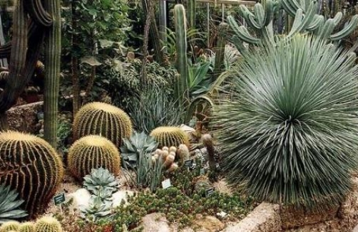 Botanischer garten linz auf for Piante grasse da giardino perenni