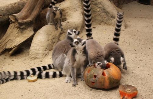 Halloween Für Mensch Und Tier Im Zoo Linz Auf Sunnyat