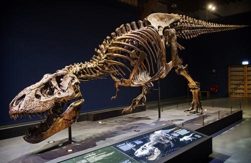 T Rex Dinosaurier Ausstellung Trexsalzburg Auf Sunny At